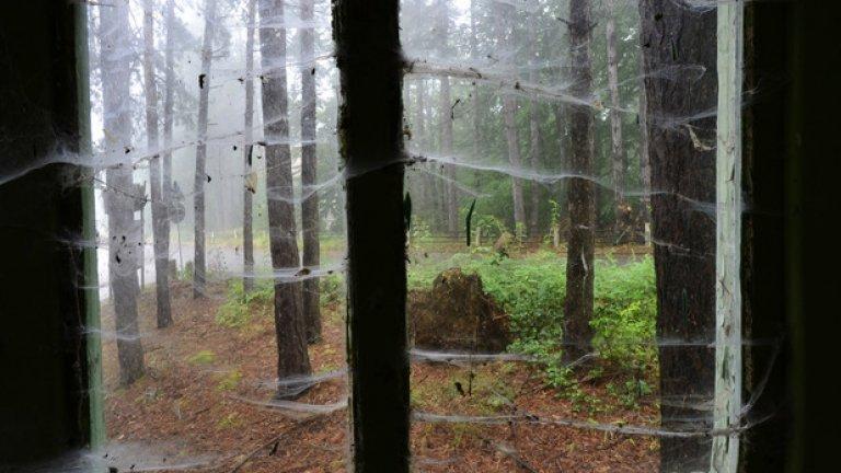 Гъсти паяжини служат за перде на стария, помътнял прозорец