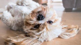 Някои съвети за по-малко косми от кучето у дома