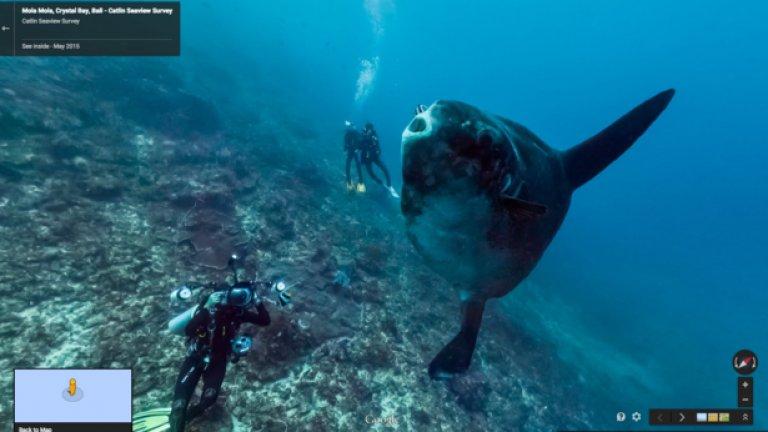 На снимката виждате рибата Mola Mola, остров Бали