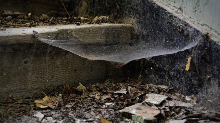 Паяжините са честа гледка из помещенията на изоставената сграда