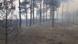 През изминалото денонощие в страната са гасени над 120 пожара