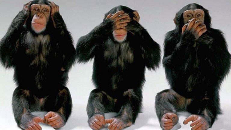 Науката все още смята, че проихождаме от маймуната, така че изберете си коя от трите ви е най-симпатична