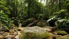 От дивата направо в джунглата - добър замисъл, но лошо изпълнение