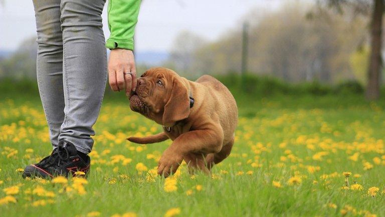 Повишават се глобите за извеждане на едри кучета без повод и наморник