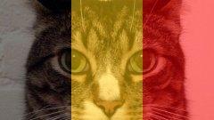 Keep calm и туитни котка