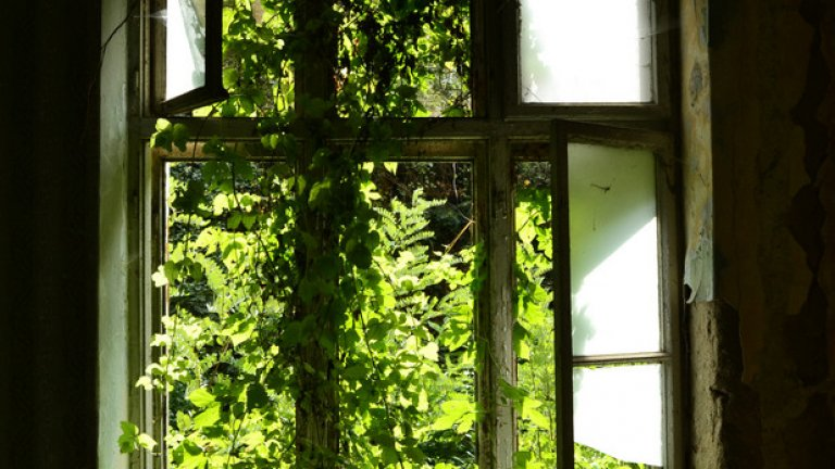 Природата нахлува през разбитите прозорци на семинарията в Черепиш