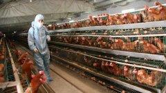 След необичайно топлата есен общо 3 милиона птици са убити в руските ферми заради съмнения за H5N8