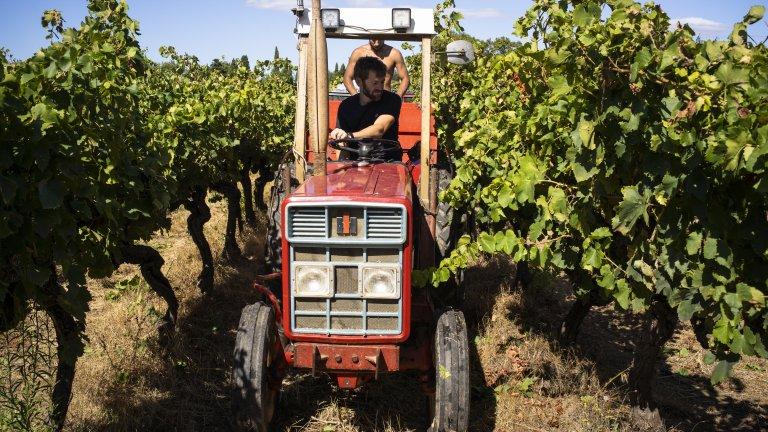 Браншът на винопроизводителите е сериозно застрашен
