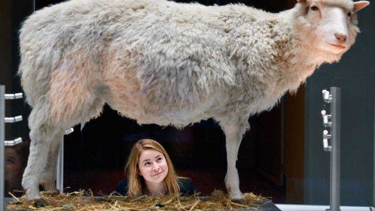 Овцата Доли изложена в Шотландския национален музей