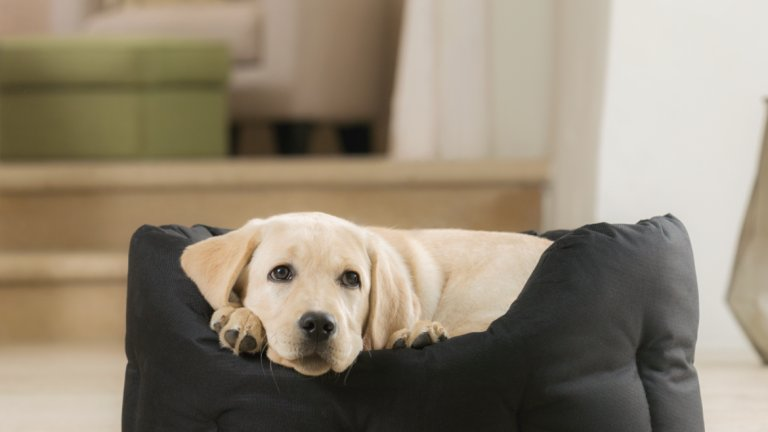 Какво да очаквате, когато ще си имате кученце у дома